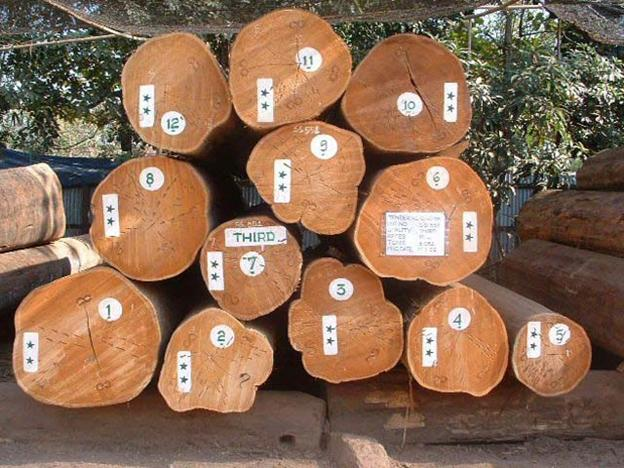 Burmese Teak Starwood Veneers Lumbers